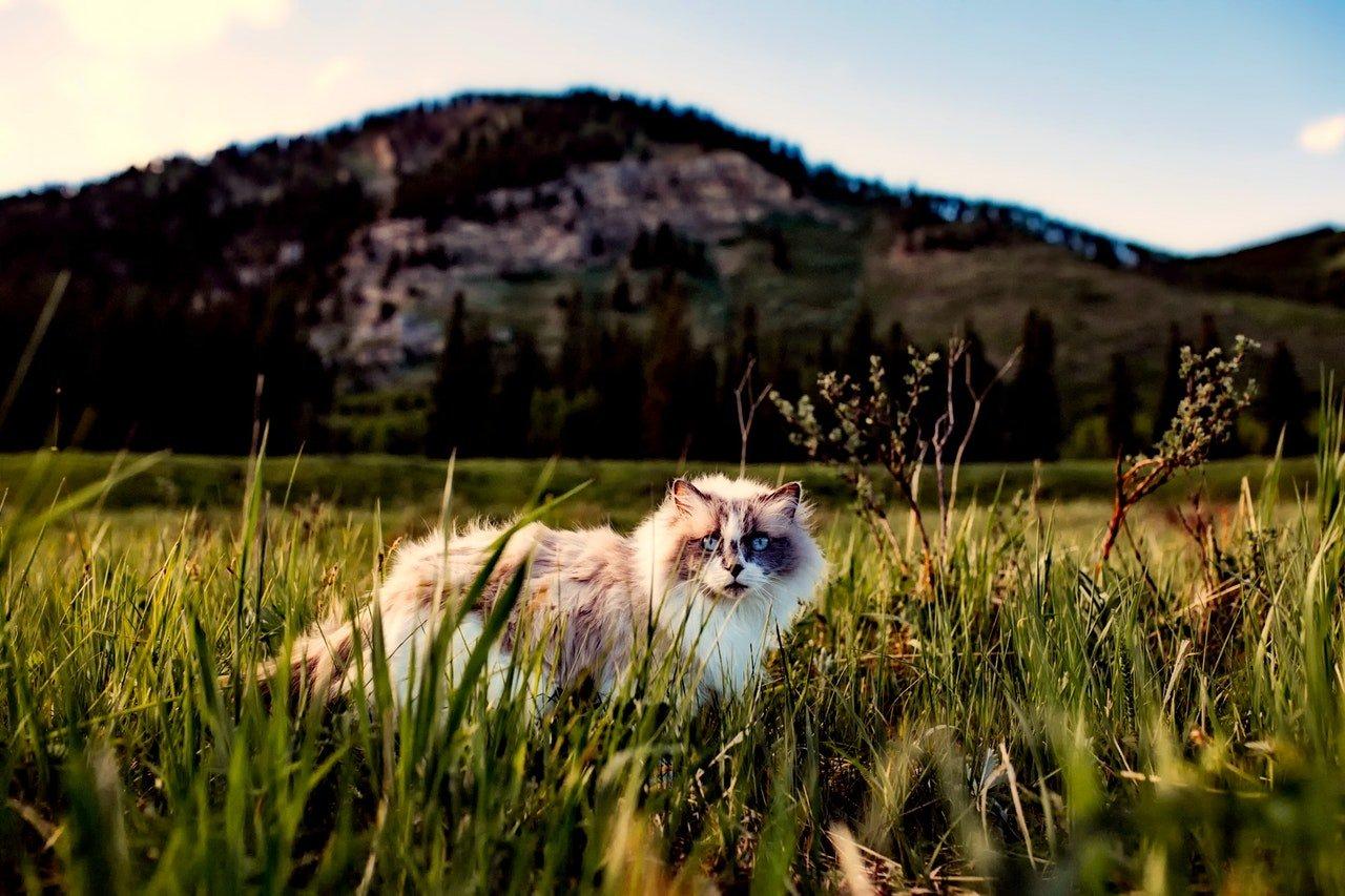 agriculture-animal-beautiful-cat-460985